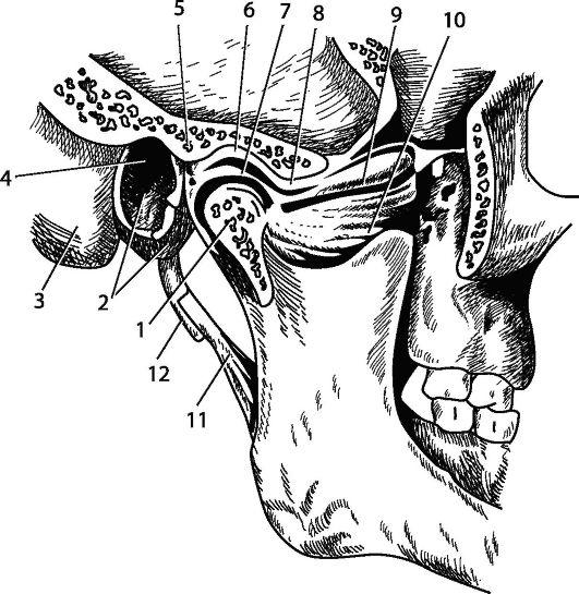 Топография височно нижнечелюстного сустава лечение деформирующего остеоартроза коленного сустава