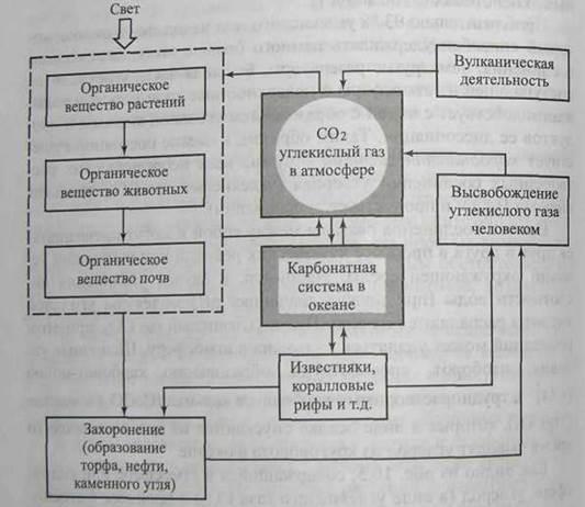 Схема круговорота воды в биосфере фото 586