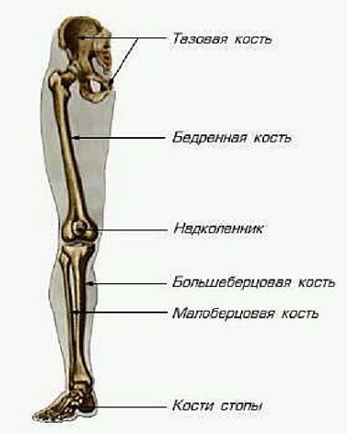 Плоские суставы нижней конечности лекарство от болезнь суставов