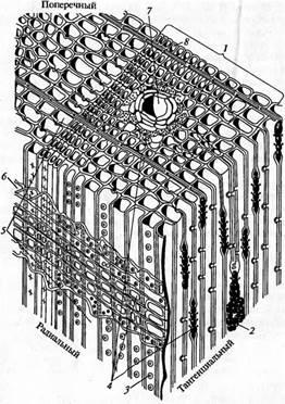 номер, частичный схема микроскопического строения древесины дуба переписка отделом обработки