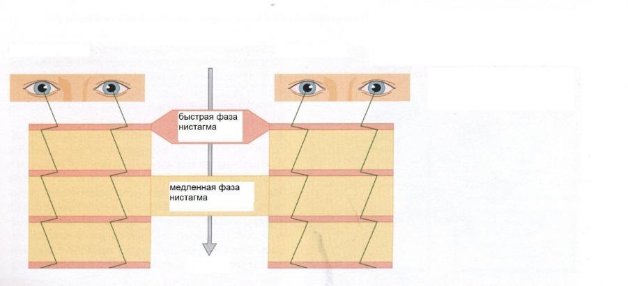 Функция вестибулярного анализатора
