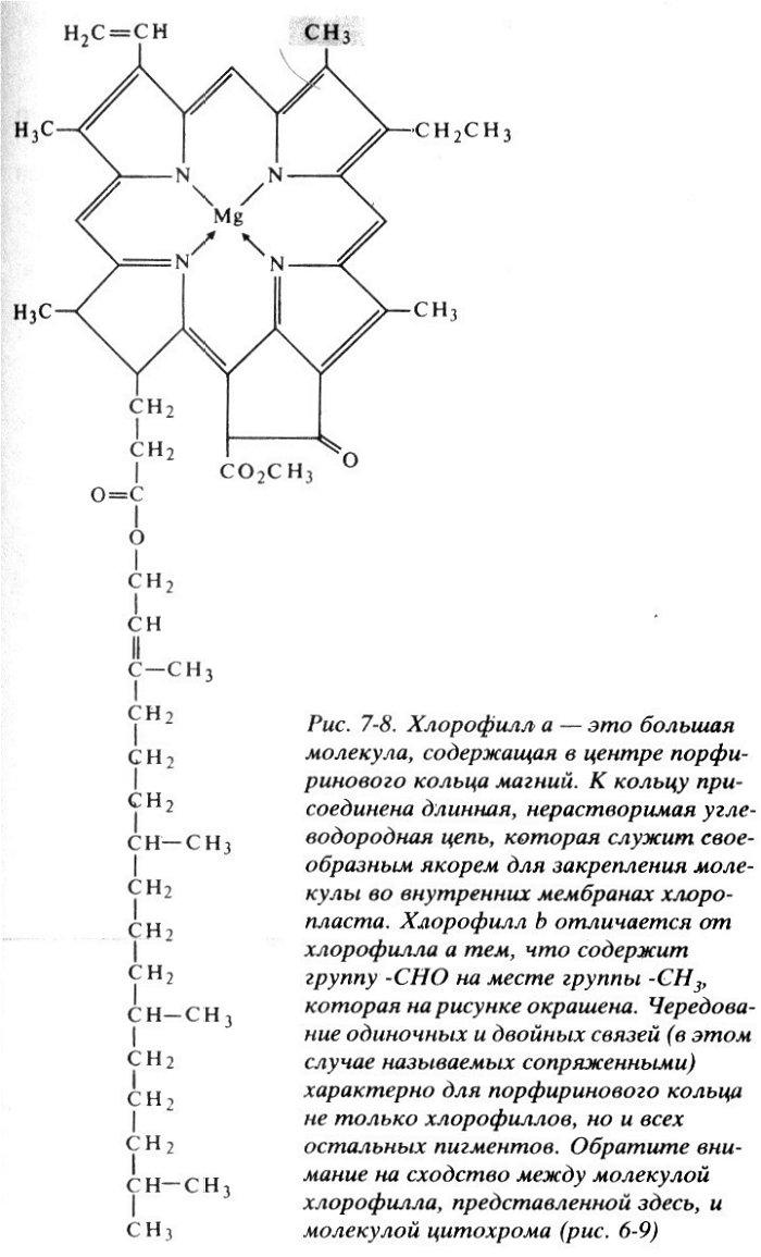 Суммарное уравнение фотосинтеза