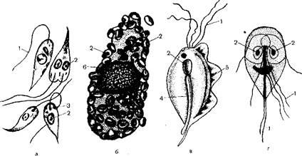лен и гвоздика от паразитов рецепт